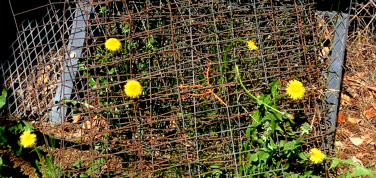 Dandelion Jailed.PS.02.